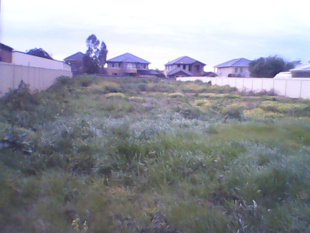 Te puni blog for How often should you mow your lawn